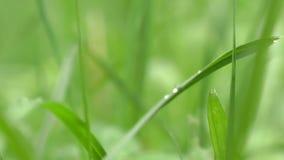 Mundo em uma gota na grama - macro da água vídeos de arquivo