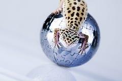 Mundo en gecko Fotografía de archivo libre de regalías