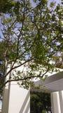 Mundo frondoso de la maravilla del árbol del gree imagenes de archivo