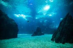Mundo gigante dos peixes do oceano no aquário para a observação foto de stock royalty free