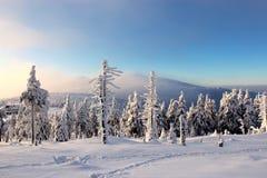 Mundo sob a neve nas montanhas Fotos de Stock