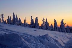 Mundo sob a neve no por do sol Fotografia de Stock