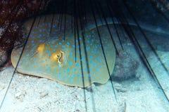 Mundo subacuático fotografía de archivo libre de regalías