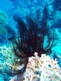 Mundo subacuático fotos de archivo