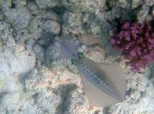 Mundo subacuático Imagen de archivo libre de regalías