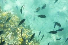 Mundo subacuático Foto de archivo
