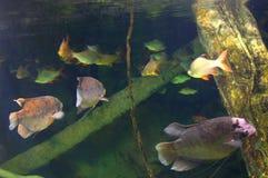 Mundo subacuático Imagen de archivo
