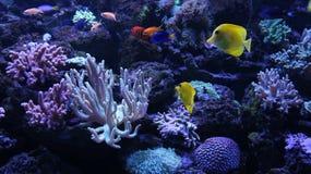 Mundo subacuático colorido Imágenes de archivo libres de regalías