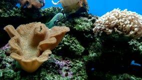 Mundo subacu?tico colorido y hermoso maravilloso con los corales y los pescados tropicales almacen de video