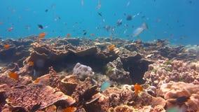 Mundo subacuático con el coral y los pescados almacen de video