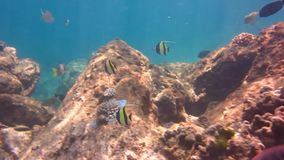 Mundo subacuático con el coral y los pescados metrajes