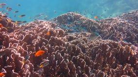 Mundo subacuático con el coral y los pescados almacen de metraje de vídeo