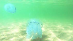 Mundo subacuático en agua profunda