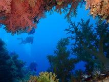 Mundo subacuático en agua profunda en flora de las flores del arrecife de coral y de las plantas en fauna del mundo azul, pescado imagenes de archivo