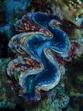 Mundo subacuático en agua profunda en flora de las flores del arrecife de coral y de las plantas en fauna del mundo azul, pescado foto de archivo libre de regalías