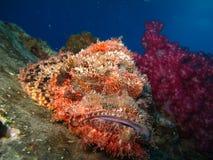 Mundo subacuático en agua profunda en flora de las flores del arrecife de coral y de las plantas en fauna del mundo azul, pescado fotografía de archivo
