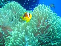 Mundo subacuático en agua profunda en flora de las flores del arrecife de coral y de las plantas en fauna del mundo azul, pescado fotos de archivo