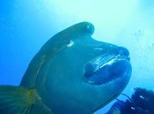 Mundo subacuático en agua profunda en flora del arrecife de coral y de la naturaleza de las plantas en la fauna marina del mundo  imagen de archivo