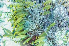 Mundo subacuático en el filón cerca del calafate de Caye en Belice foto de archivo libre de regalías