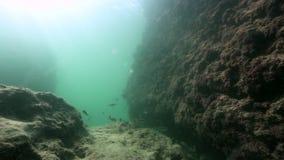 Mundo subacuático en el mediterráneo con los pequeños pescados almacen de metraje de vídeo