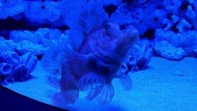 Mundo subacuático en oceanarium almacen de video
