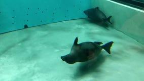 Mundo subacuático en oceanarium almacen de metraje de vídeo