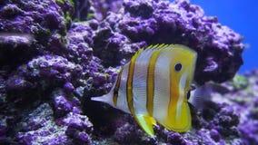 Mundo subacuático hermoso