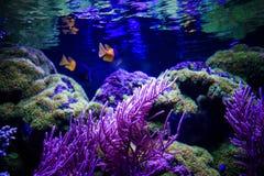 Mundo subacuático maravilloso y hermoso con los corales y tropica fotos de archivo