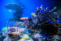 Mundo subacuático maravilloso y hermoso con los corales y tropica Fotos de archivo libres de regalías