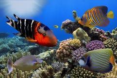 Mundo subacuático maravilloso y hermoso con los corales y tropica Fotografía de archivo