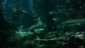 Mundo subaquático filme