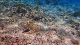 Mundo subaquático 2 Imagem de Stock