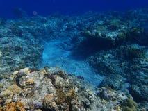 Mundo subaquático Foto de Stock