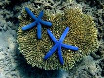 Mundo subaquático. Imagens de Stock Royalty Free