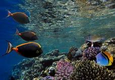 Mundo subaquático bonito com corais Fotos de Stock Royalty Free