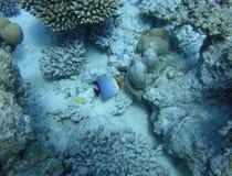 Mundo subaquático colorido do Mar Vermelho imagens de stock