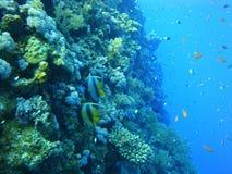 Mundo subaquático colorido do Mar Vermelho fotografia de stock