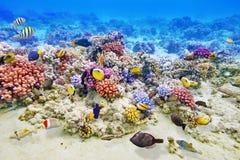 Mundo subaquático com corais e os peixes tropicais Imagens de Stock