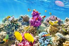 Mundo subaquático com corais e os peixes tropicais Fotos de Stock