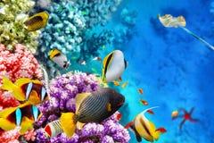 Mundo subaquático com corais e os peixes tropicais
