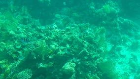 Mundo subaquático com corais e os peixes tropicais video estoque