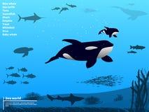 Mundo subaquático do mar do oceano de Infographics Imagens de Stock Royalty Free