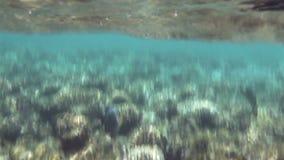 Mundo subaquático do Mar Vermelho (o Golfo de Aqaba) vídeos de arquivo