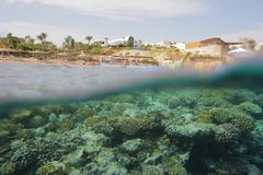 Mundo subaquático dos peixes imagens de stock royalty free