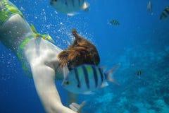 Mundo subaquático dos peixes fotos de stock royalty free