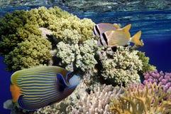 Mundo subaquático maravilhoso e bonito com corais e tropica Imagem de Stock Royalty Free