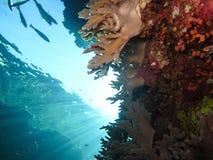 Mundo subaquático nas águas profundas na flora das flores do recife de corais e das plantas em animais selvagens do mundo azul, e fotos de stock royalty free