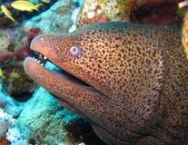 Mundo subaquático nas águas profundas na flora das flores do recife de corais e das plantas em animais selvagens do mundo azul, e imagens de stock