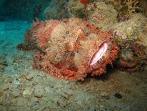 Mundo subaquático nas águas profundas na flora das flores do recife de corais e das plantas em animais selvagens do mundo azul, e imagens de stock royalty free