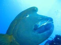 Mundo subaquático nas águas profundas na flora das flores do recife de corais e das plantas em animais selvagens do mundo azul, e fotografia de stock